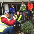 Thumbnail for post: Koreans help create a garden for London's Royal Free Hospital