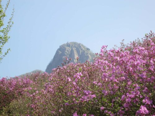 Featured image for post: 2017 travel diary 3: Sancheong – two festivals in bright pink