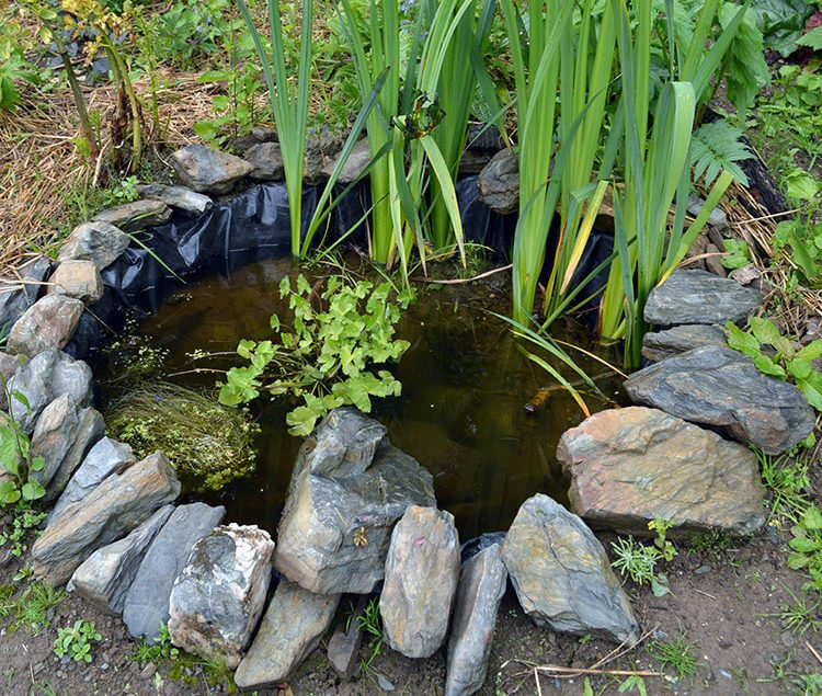 Making Small Wildlife Pond