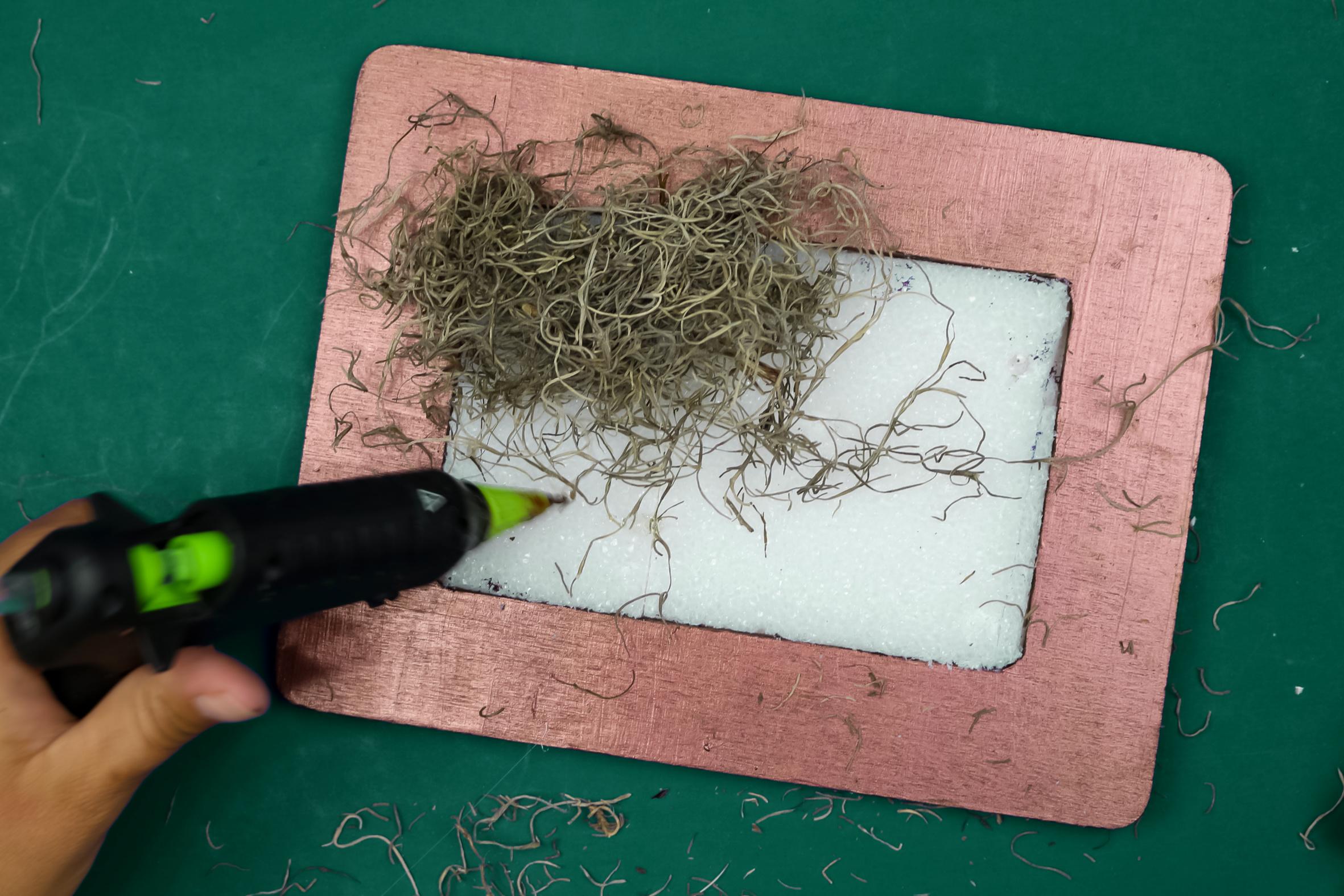 glue gun and spagnum moss in a frame