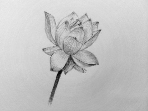 Como desenhar uma flor com um lápis? Lição faseada. Passo 14. Padrões Lápis - Fenlin.ru