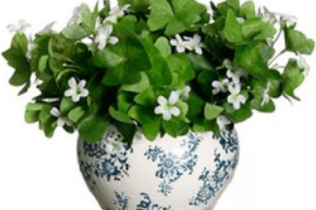 Indoor green plant with white flowers new artist 2018 new artist indoor house green plants and flowers isolated on white vector indoor house green plants and flowers isolated on white vector set green plants in pots best mightylinksfo