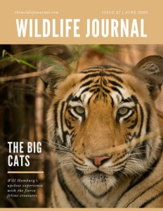 Yellow and Tiger Nonfiction Magazine Cover   Templates by Canva Yellow and Tiger Nonfiction Magazine Cover