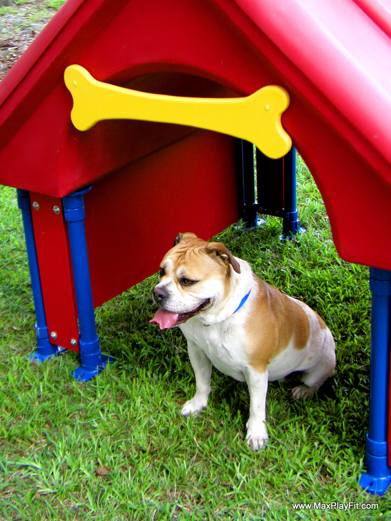 Dog Park Equipment Max Play Fit Llcmax Play Fit