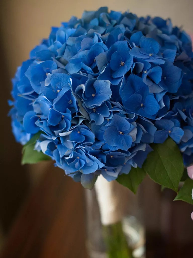 The Best Blue Wedding Flowers  and 16 Gorgeous Blue Bouquets  Blue wedding bouquet of hydrangea