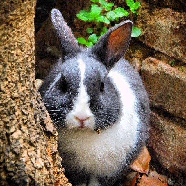 Angry Bunny | Critters | Pinterest