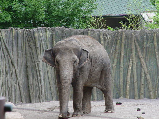 video portland zoo - 550×412