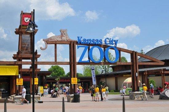 Kansas City Zoo Sea Lions