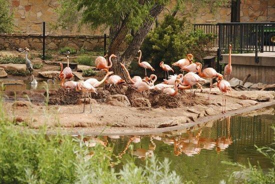 Abilene Zoo Hours Texas