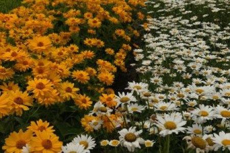 Flower shop near me white flower farm morris ct flower shop flower shop white flower farm morris ct mightylinksfo