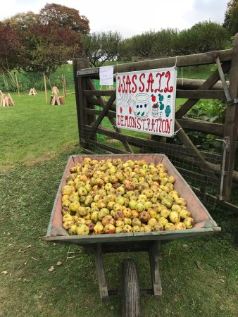 New Forest Cider Ringwood 2020 All You Need To Know