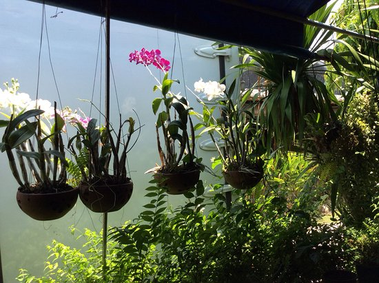 Tropical Hanging Plants