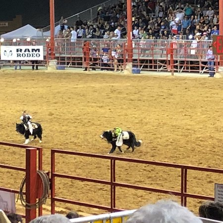 Bergeron Rodeo Grounds Davie 2019 All You Need To Know