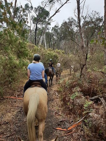Spring Creek Horse Rides Bellbrae Updated 2019 All You