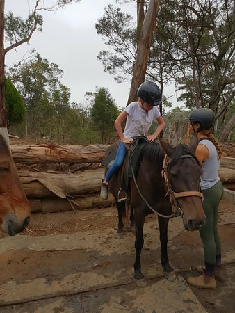 Spring Creek Horse Rides Bellbrae 2019 All You Need To