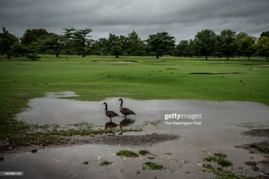 East Potomac Golf Course Stock Photos and Pictures   Getty Images East Potomac Golf Course partly flooded after heavy rain seen on Tuesday  July 24 in Washington