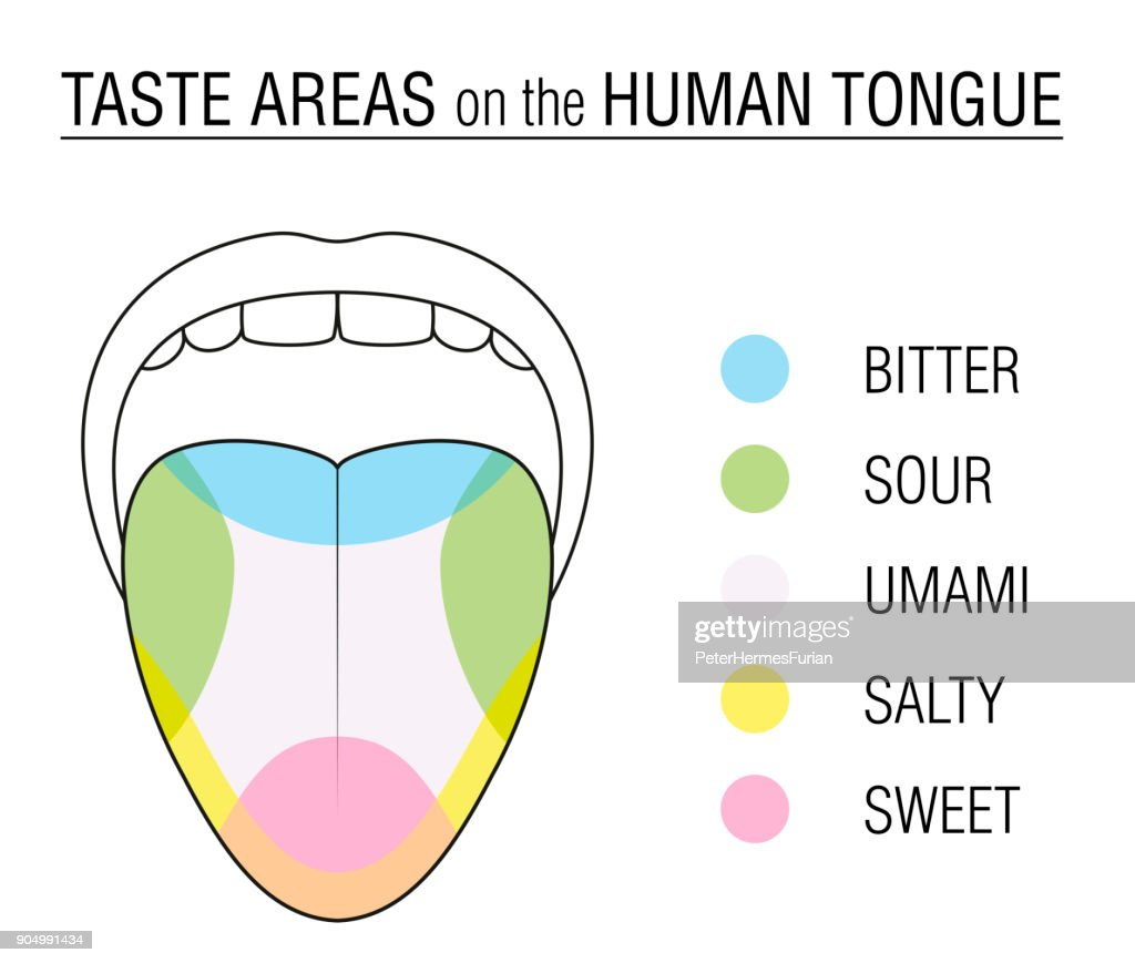 Taste Bud Diagram Map Wiring Diagram Services \u2022 Blank Touch Diagram  Blank Tongue Diagram