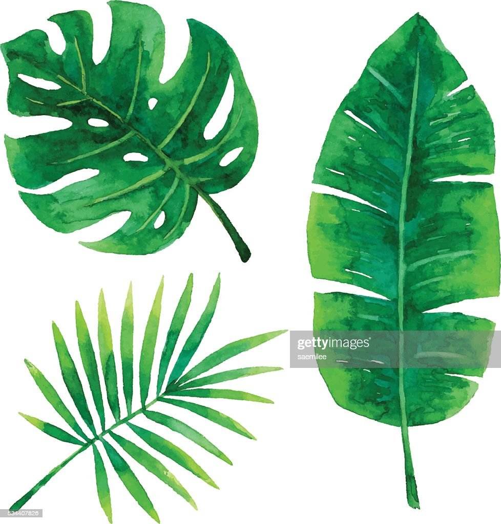 Rainforest Drawings Easy Tropical