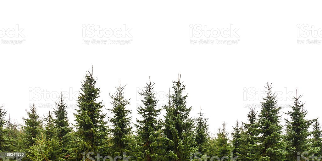 Different Kinds Of Christmas Trees