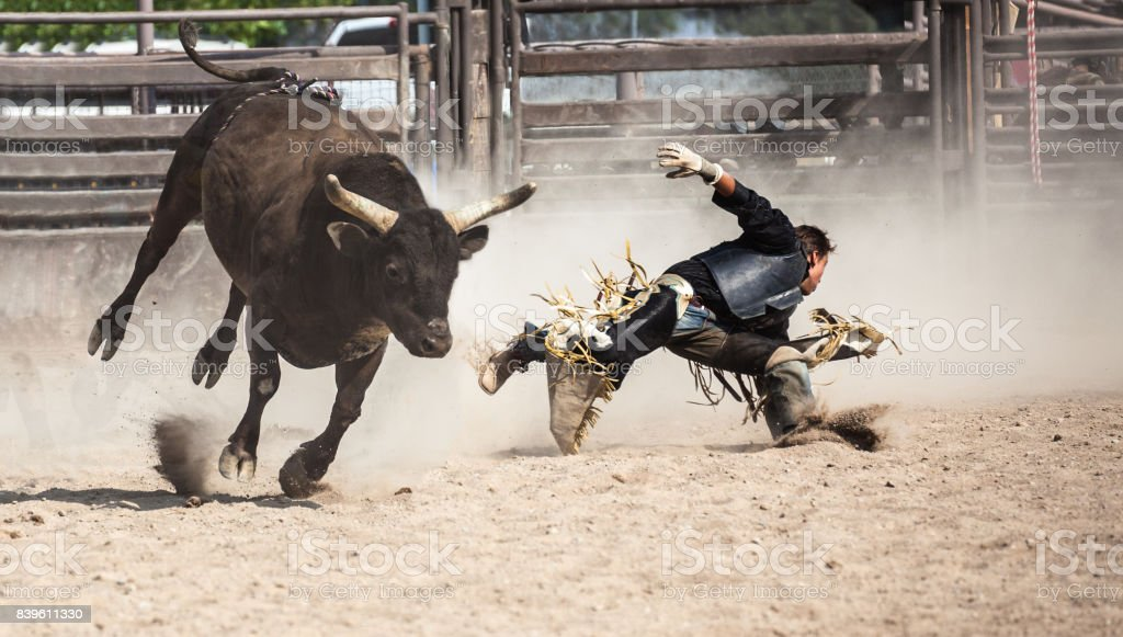 Best Bull Riding Stock Photos Pictures Amp Royalty Free
