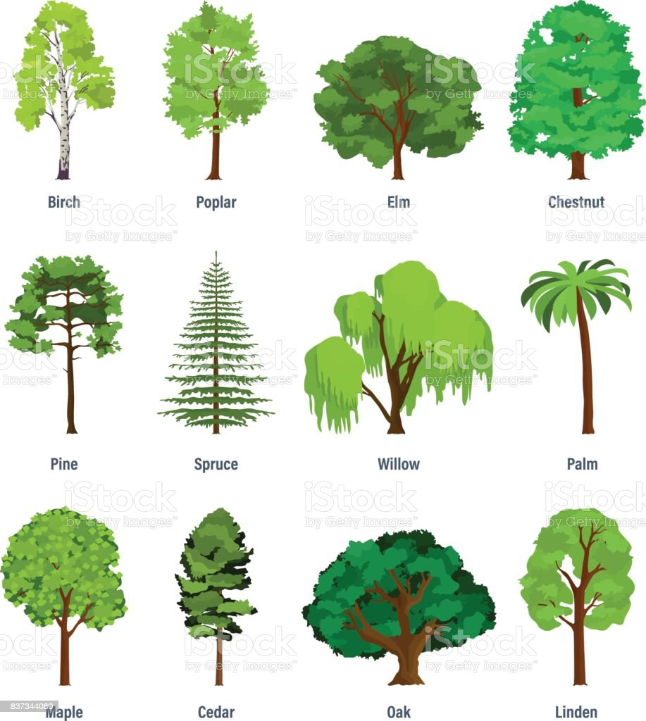 Collection Of Different Kinds Of Trees Stock Illustration ...