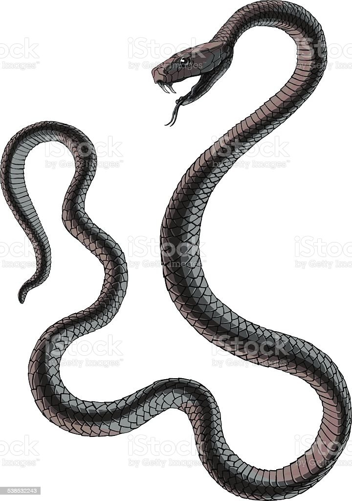 Black Best Information Snake Mamba