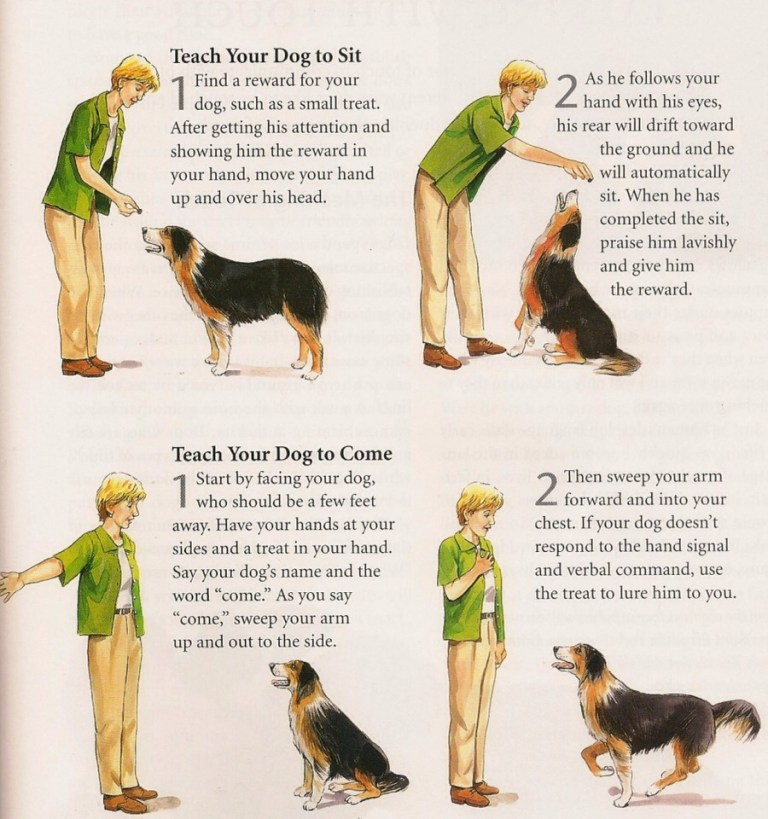 Easy Tips On How To Train Your Dog