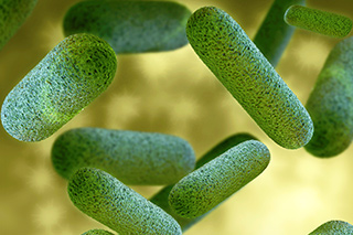 Bacterium That Causes Q Fever Linked To Non Hodgkin