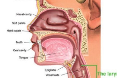 Vocal cords function quizlet 4k pictures 4k pictures full hq quizlet lovely human body parts quizlet education using body pictures structures the eye and their functions respiratory system flashcards quizlet ccuart Image collections
