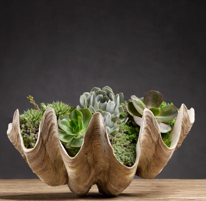Large Succulents Sale