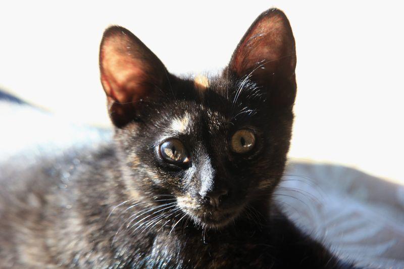 Aberglaube In Verbindung Mit Katzen - Ostseesuche.Com