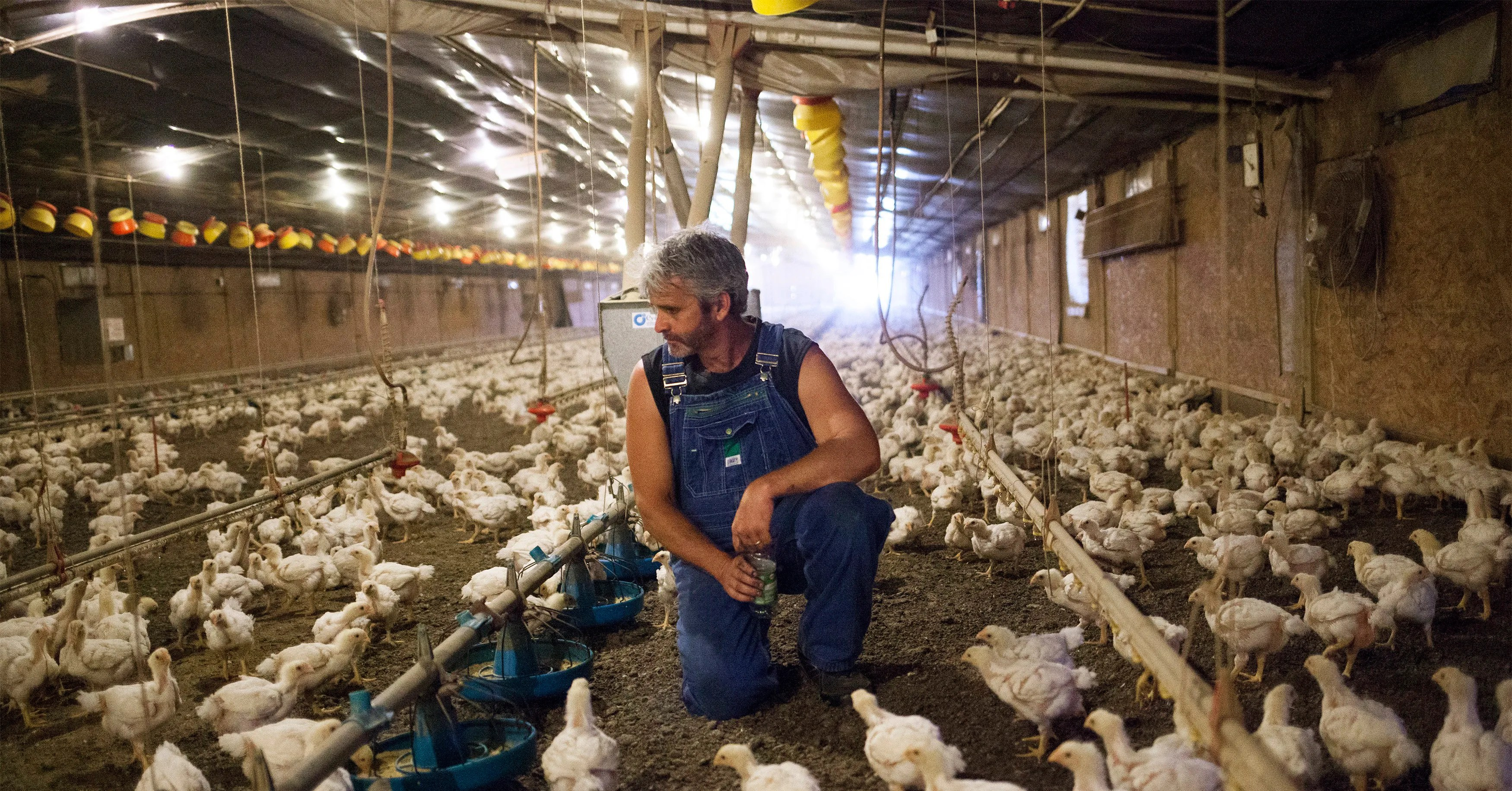 The Poultry Industry Responds To An Activist Farmer Wired