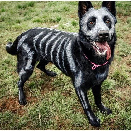 Halloween costumes for big dogs diy wallsviews cute big dog costumes path decorations pictures full decoration solutioingenieria Image collections