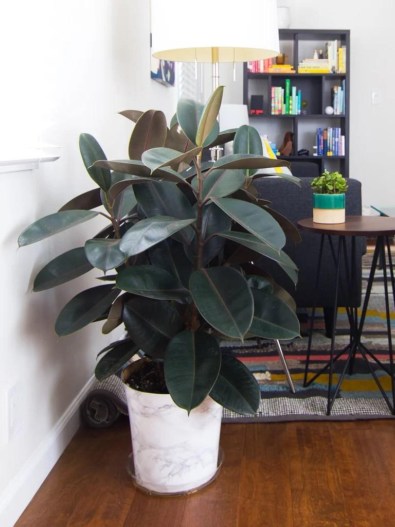 Indoor Plants Emit Oxygen Night