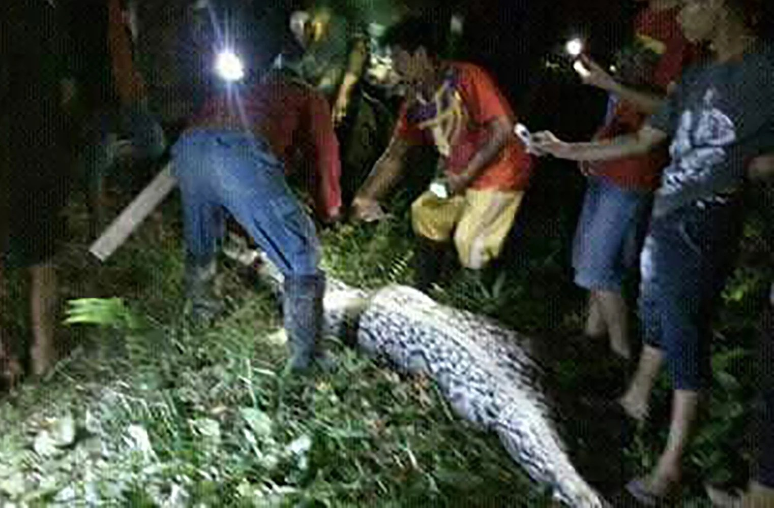 Indonesian Python Swallows Man Whole, Video Shows - NBC News