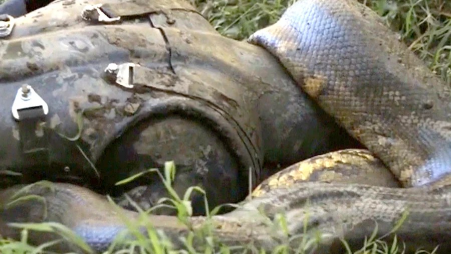 Man to be 'eaten alive' by anaconda on TV - TODAY.com