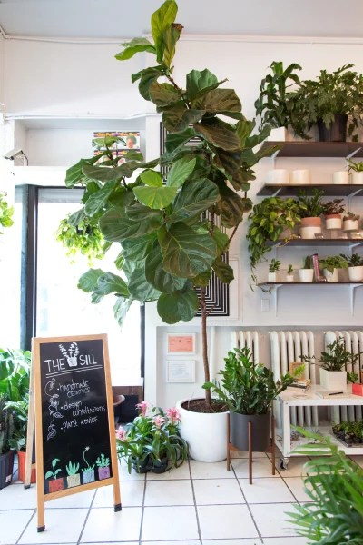 Best Easy Indoor Plants