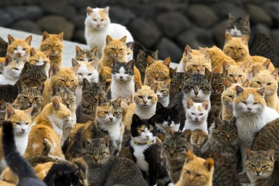 'Cat Island': Felines Outnumber Humans on Japan's Aoshima ...