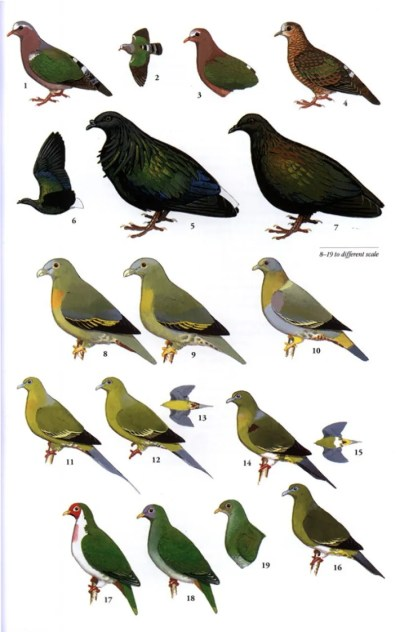 A Field Guide to the Birds of Thailand: Craig Robson ...