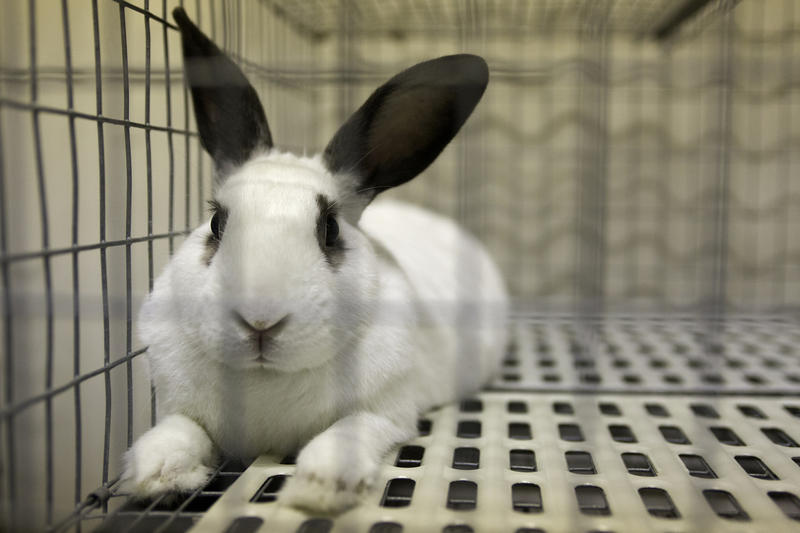 Image of: Hoarder Aspca Animal Shelters Urge People Not To Buy Live Bunnies For Easter Kut