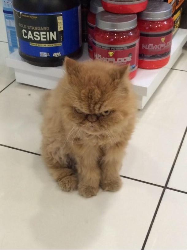 angry wet kitten - 610×814