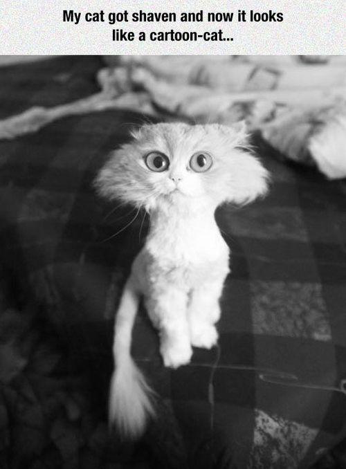 White Black And Meme Cat