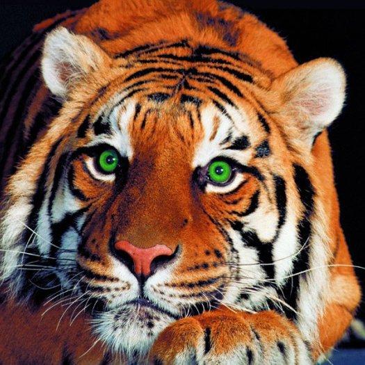 Son Profil La Tigresse Du Bengale Skyrock Com