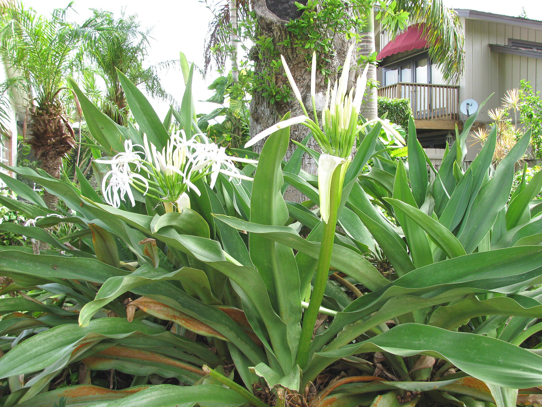 Wholesale Succulents Near Me