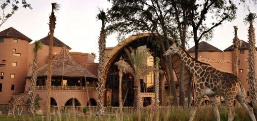 Resorts to Visit Animal Kingdom Lodge
