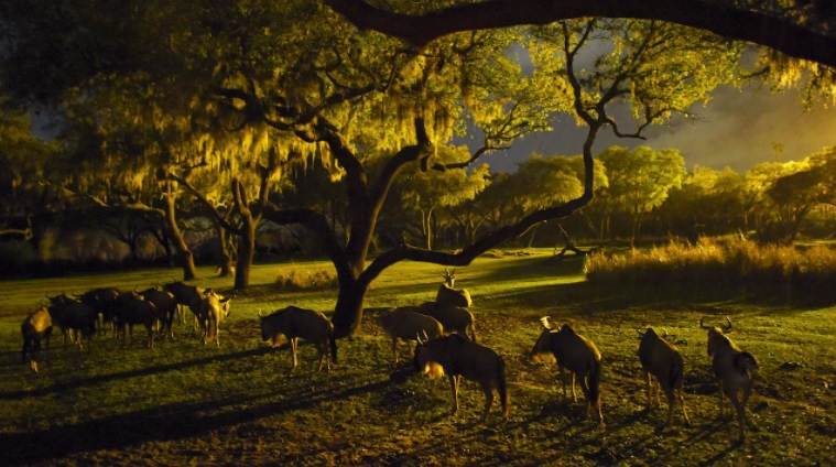 Kilimanjaro Safari at night