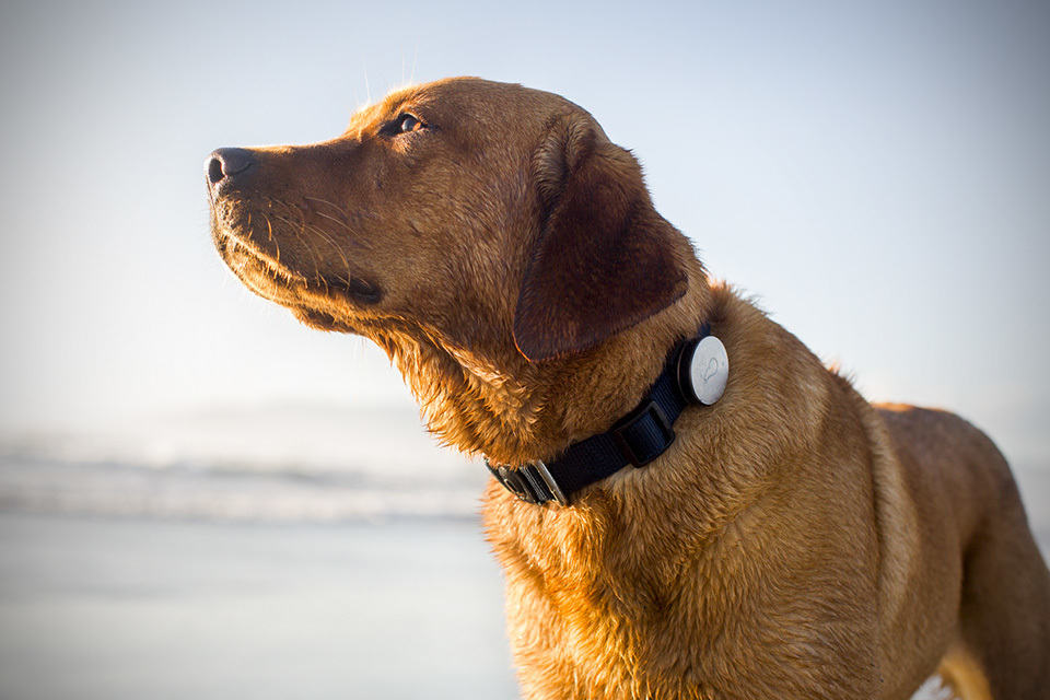 Whistle Activity Tracker For Dogs Mikeshouts