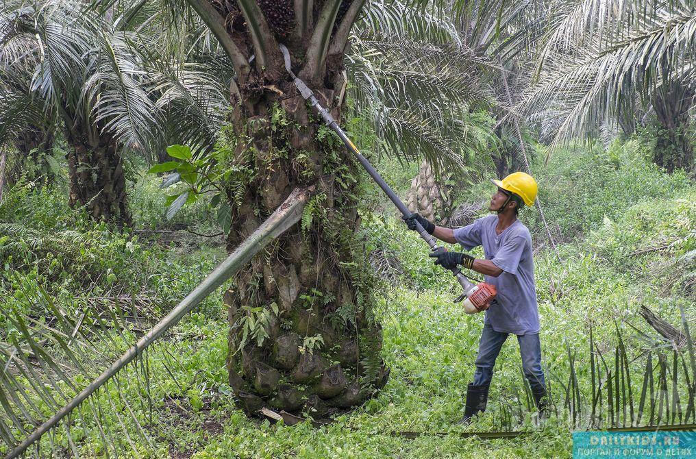 Palm olein trong dinh dưỡng trẻ em (Komarovsky)