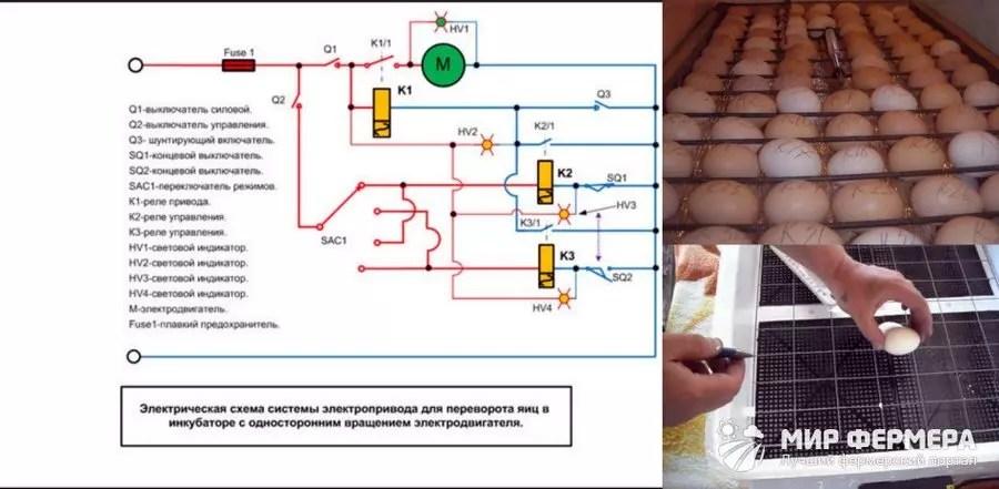 Automatische Drehen von Eiern im Inkubator
