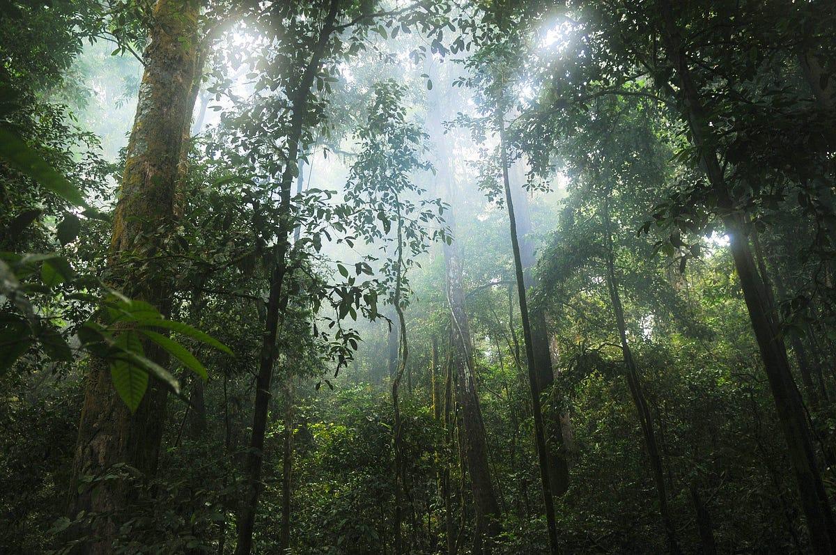 amazon rainforest location - HD1200×796